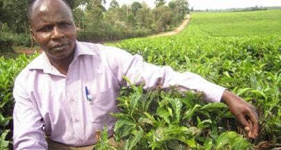 培力與合作,公平貿易支持茶農適應氣候變遷