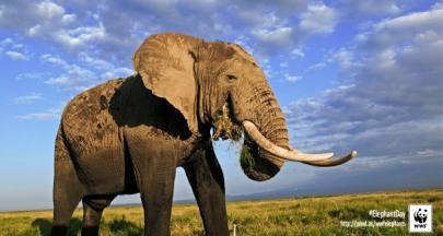 不要一個越來越寂靜的星球,世界動物日一起尊重生命