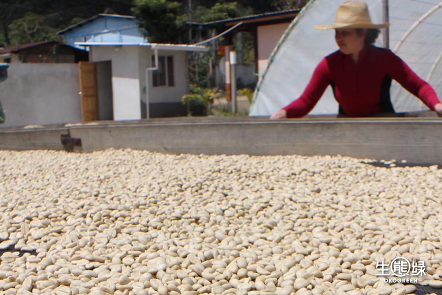 咖啡豆-水洗日曬6.jpg